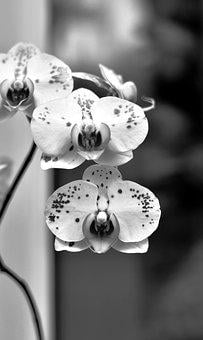 Orchids, Flowers, Tropical, Bloom, White, Flower, Plant