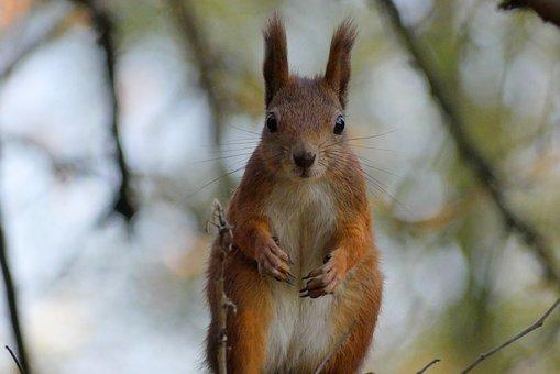 Kraków, The Squirrel, Park, Autumn