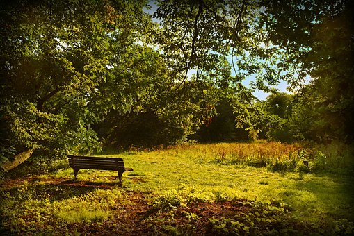 Bench, Sitting, Resting Place, Park, Field, Tree