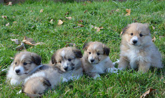 Puppies, Puppy, Dogs, The Family Of A Young Dog