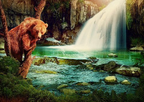 Fantasy, Brown Bear, Waterfall, River, Fish, Tree, Rock
