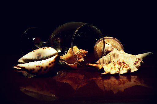 Seashells, Still Life, Meeresbewohner, Collection