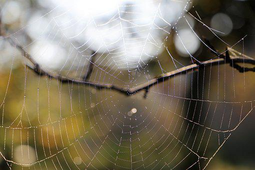 Morning, Spider Net, Leaves, Branch, Drops