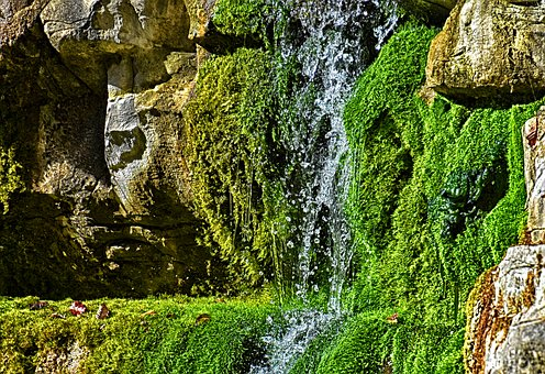 Nature, Rock, Moss, Water, Landscape, Green, Stone