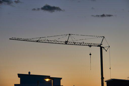 Crane, Autumn, Birds, Sunrise