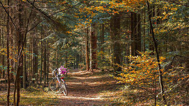 Forest, Way, The Path, Bike, Autumn, October, Tree