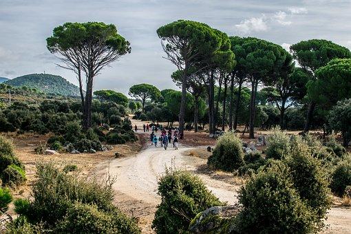 Hiking, Nature, Walk, Landscape, Trees