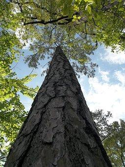 Tree, Trunk, Bark