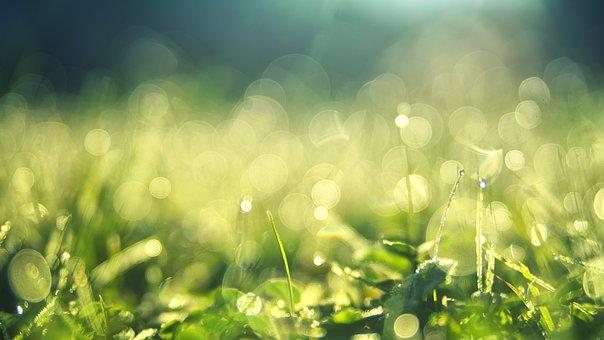 Meadow, Morgentau, Nature, Dew, Water, Bokeh, Close Up