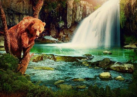 Fantasy, Brown Bear, Waterfall, River, Fish, Tree, Rock