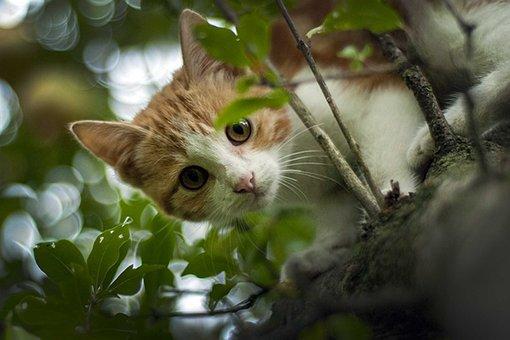 Zoo, Nature, Pet, Animal, Cat, Cute