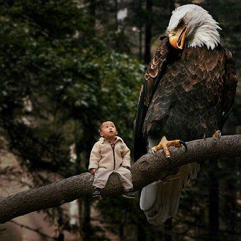Adler, Child, Eagle, Kid, Wood, Forest