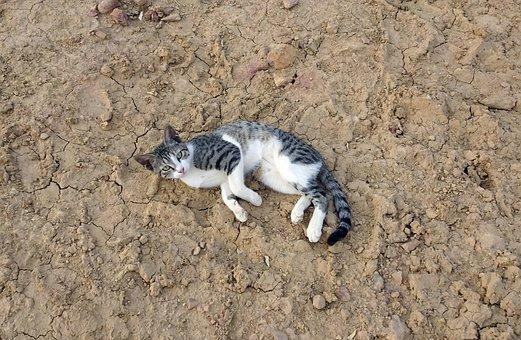 Kitten, Cat, Pet, Animal, Cute, Feline, Adorable