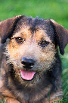 Dog, Animal, Puppy, Nice, Pet, Animals, Mammal, Young