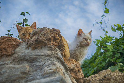 Cat, Stone, Animals, Feline, Kitten, White, Pet