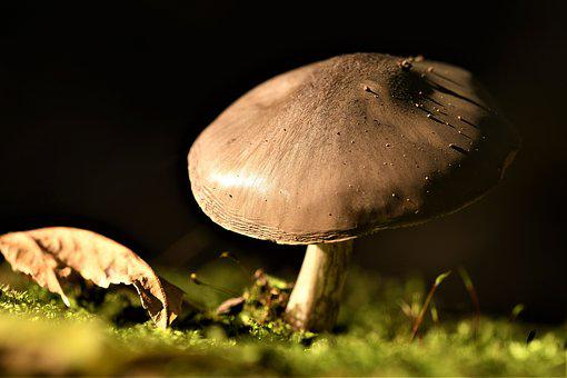 Mushroom, Macro, Nature, Moss, Log, Autumn, Brown