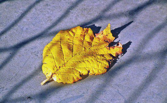Leaf, Yellow, Autumn, Nature, Gold