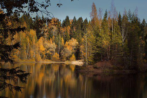 Autumn, Pond, Landscape, Nature