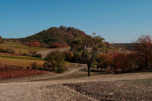 Wine, Winegrowing, Vine, Winemaker, Agriculture, Autumn