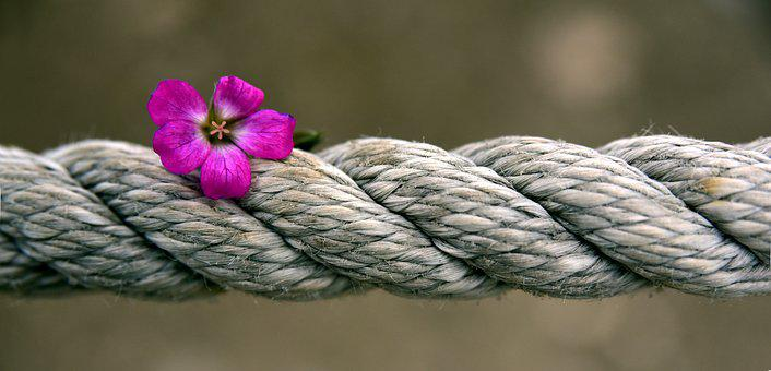 Rope, Blossom, Bloom, Banner, Strength, Rotated