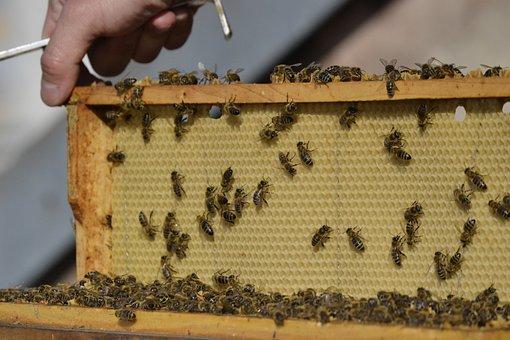 Bee, The Hive, Bee-keeping, Honeycomb, Opelenie, Bees