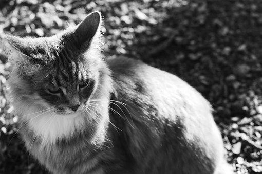 Cat, Pet, Animal, Portrait