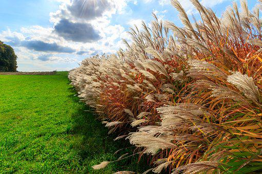 Autumn, Grass, Grasses, Sky, Color, Colorful