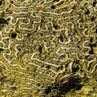 Coral, Sea, Structure, Barbados, Caribbean, Pattern