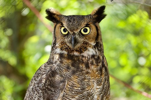 Angry, Dare Not, Starring, Owl, Mad, Watching
