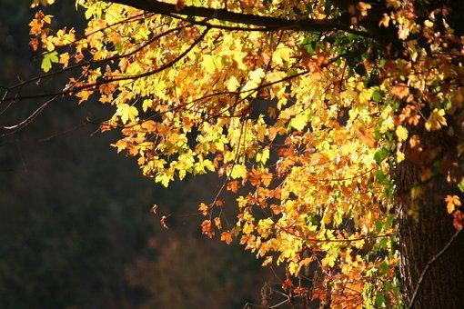 Leaves, Trees, Autumn, Color, Environment, Foliage
