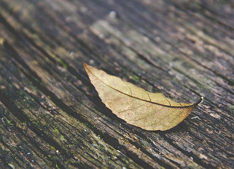 Autumn Leaf, Leaf, Autumn, Fall, Forest, Season, Alone