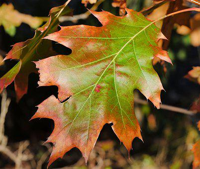 Autumn Leaf, Leaves, Leaf Coloring, Fall Color, Green
