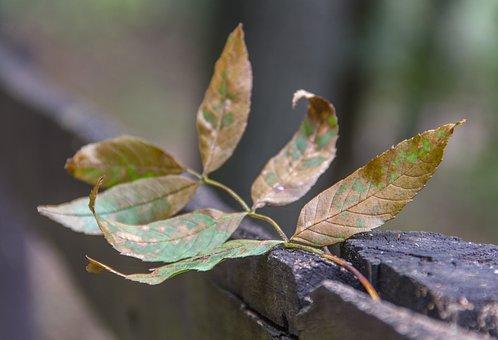 Autumn Leaf, Leaf, Autumn, Nature, Season, Fall