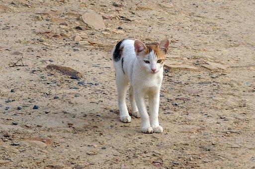 Kitten, Cat, Feline, Domestic, Pet, Animal, Adorable