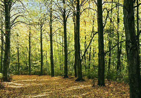 Autumn, Forest, Landscape, Nature, Tree, Foliage