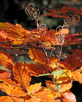 Foliage, Leaves, Zeschłe List, The Leaves Of Chestnut