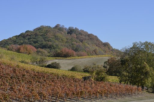 Hill, Forest, Landscape, Nature, Wine, Agriculture