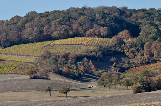 Wine, Hill, Landscape, Agriculture, Autumn, Vineyard