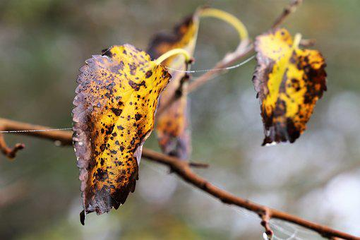 Leaves, Branch, Yellow, Brown, Colorful, Wet