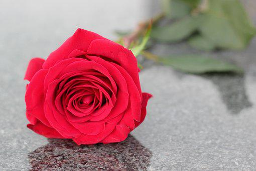 Red Rose, Flower, Love Symbol, Condolence, Black Marble