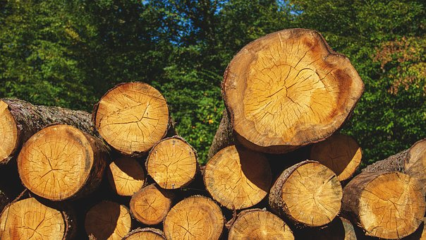 Wood, Tree Trunks, Nature, Firewood, Stack, Forest