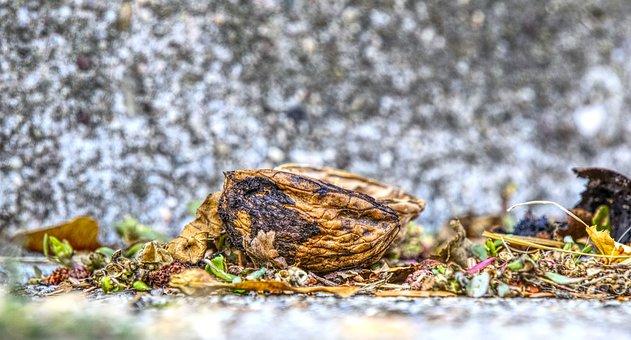 Nutshell, Nut, Empty, Cracked, Still Life, Close Up