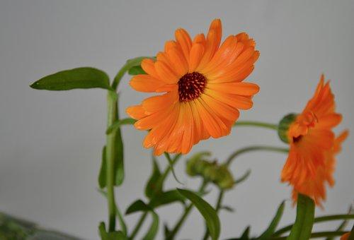Flower, Flowers, Plant, Bouquet, Offer, Decoration