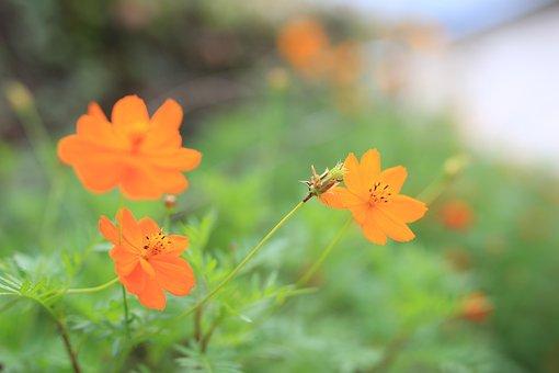 Orange, Flowers, Plants