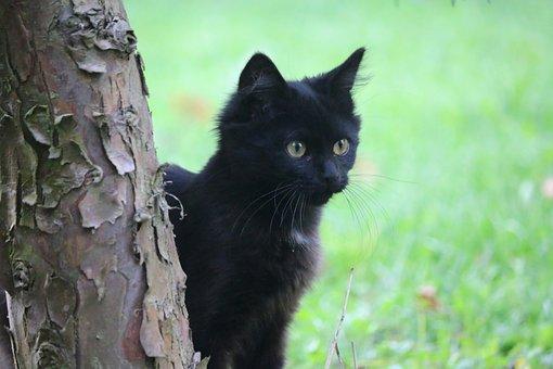 Cat, Animal, Kitten, Adorable, Portrait