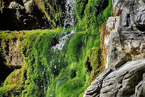 Nature, Rock, Moss, Water, Landscape, Green, Stone
