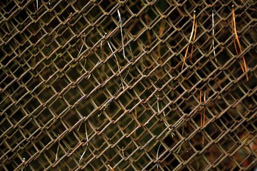 Fence, Netting, Iron, Metal, Scrap, Pine Needles