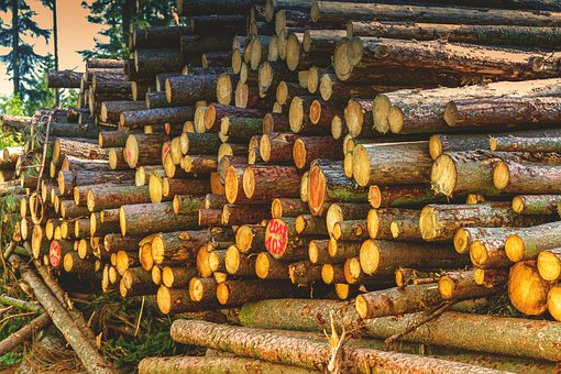 Tree Trunks, Wood, Forest, Stack, Nature, Firewood