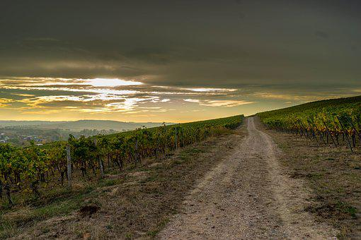 Away, Vineyards, Vineyard, Wine, Landscape, Winegrowing