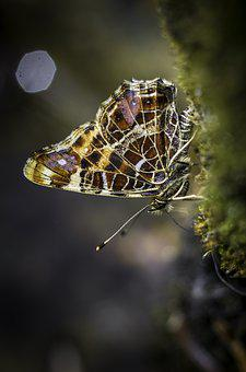 Butterfly, Nature, Wing, Garden, Wings, Painted Lady